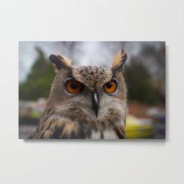 European Eagle Owl Metal Print