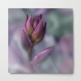 Hosta Flower Bud Purple And Green Metal Print