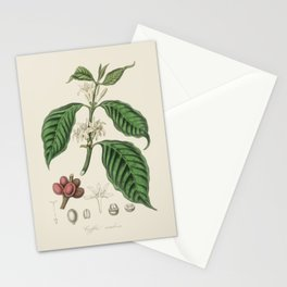 Vintage Coffee Bean Botanical Illustration Stationery Cards