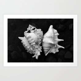 Shell No.7 Art Print