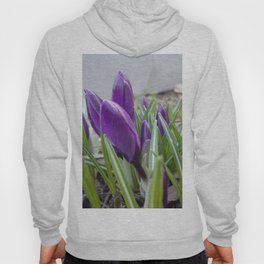 buds of crocuses Hoody