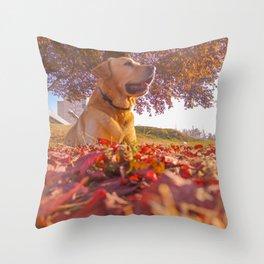 Labrador in park Throw Pillow