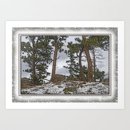 PINES ON ROCKY SNOW Art Print