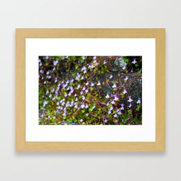 Irish Mist Framed Art Print
