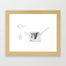 Fish Vertebrae Study Framed Art Print