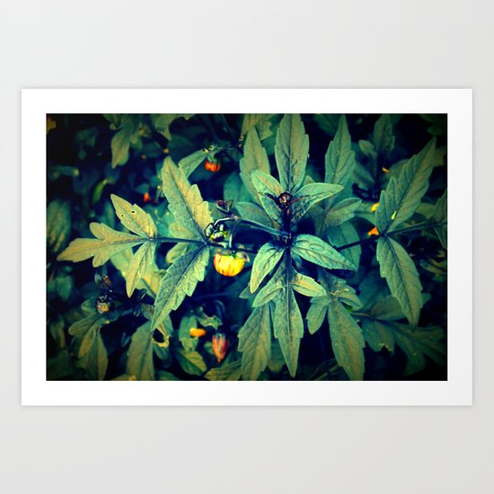 Flower Bud among leaves  Art Print