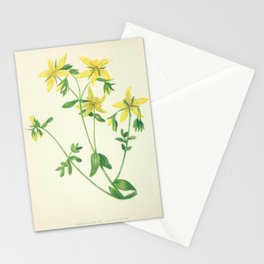 PERFORATED ST JOHN_S WORT Stationery Cards