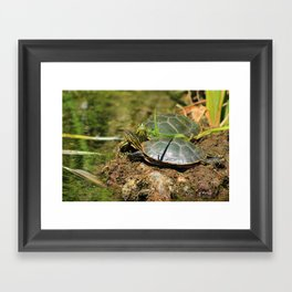 Two Western Painted Turtles Framed Art Print
