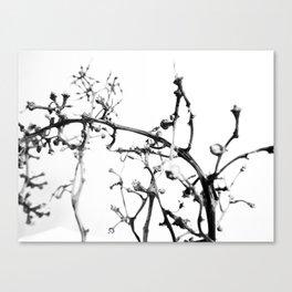 Strange Trees 3 Canvas Print
