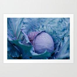 Garden Cabbage Art Print