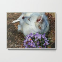 Sylvie Naps With the Crocuses  Metal Print
