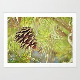 Pine Cone in the Sun Art Print