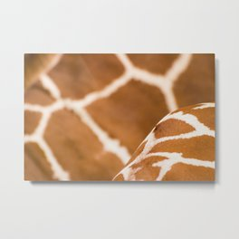 Wildlife Collection: Giraffe Metal Print