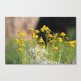 Closeup of Golden Yellow Wildflowers Coachella Valley Wildlife Preserve Canvas Print
