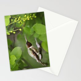 Hummingbird Hiding Stationery Cards