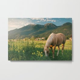 Pretty Horse Eating Grass in the Montana Sunset Metal Print