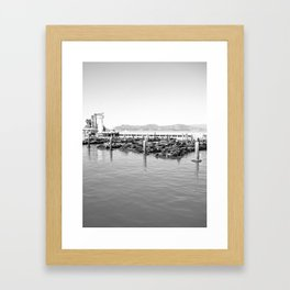 sea lions Framed Art Print