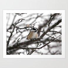 Winter Windblown Black-Capped Chickadee Art Print