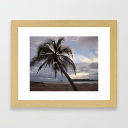 Lone Palm Framed Art Print