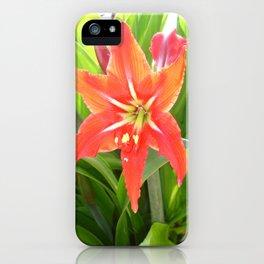 Orange Amaryllis Flower Blooms in Springtime  iPhone Case