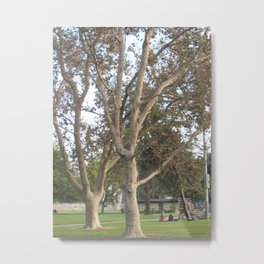 Stately Trees Metal Print