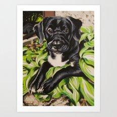 Sascha Art Print