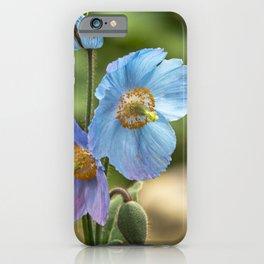 Meconopsis Poppies iPhone Case