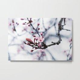 Beautiful Cherry Blossom - Hill Cherry Metal Print