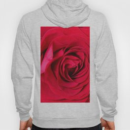 Red Rose Close-up #decor #society6 #buyart Hoody