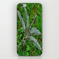 dragonfly iPhone & iPod Skins featuring dragonfly by  Agostino Lo Coco