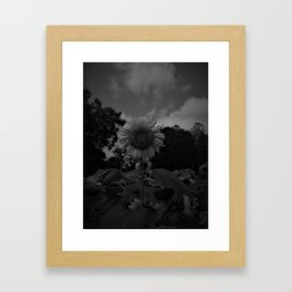 HD Black and White Sunflower Framed Art Print