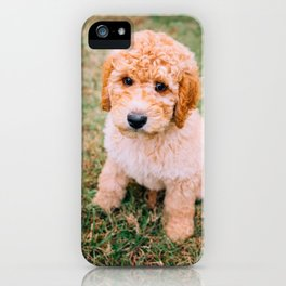 Cute Puppy by Erick Lee Hodge iPhone Case