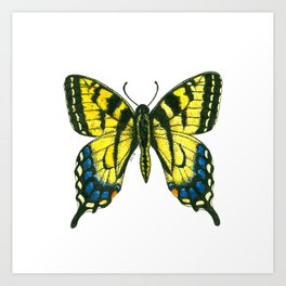 Tiger swallowtail butterfly watercolor and ink Art Print