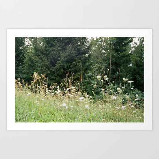 Wildflowers 1 Art Print