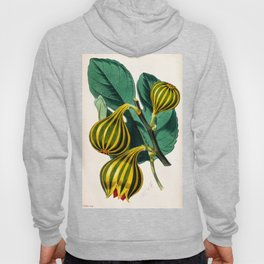 Fig plant, vintage illustration Hoody