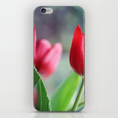 Red Tulips iPhone & iPod Skin