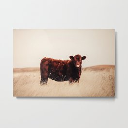 Red Angus Cow Art Metal Print