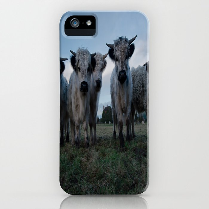 White High Park Cow Herd iPhone Case