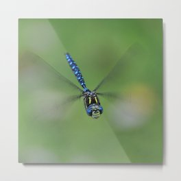 Smiling Dragonfly Metal Print