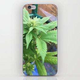 Cannabis and Mantis iPhone Skin