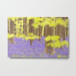Bluebell forest in full bloom Metal Print