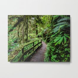 Quinault Rainforest Trail   5-24-18  Metal Print