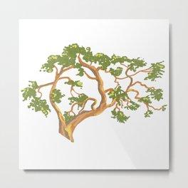 Arbutus Tree 2 Metal Print