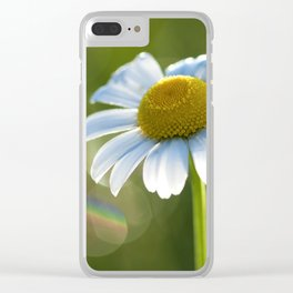 Daisy after rain at backlight Clear iPhone Case