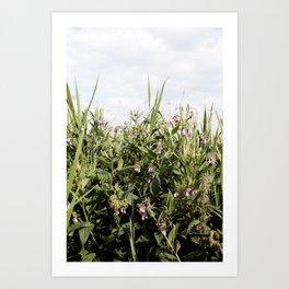 Field of Comfrey Art Print