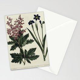 Flower Lobe-leaved Meadow Sweet Iris leaved Sisyrinchium spiraea lobata sisyrinchium iridioides62 Stationery Cards