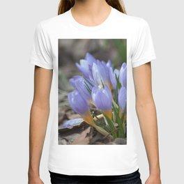 Crocus etruscus in silva T-shirt