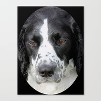 border collie Canvas Prints featuring Border Collie by Doug McRae