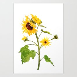 One sunflower watercolor arts Art Print