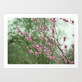 Spring - itself Art Print